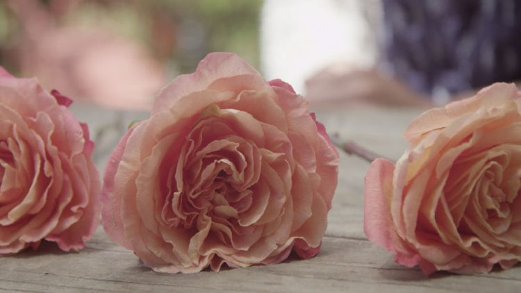 5 Creative Ways to Preserve Funeral Flowers